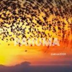 PAHUMA a.k.a.佑龍(ウリョン)
